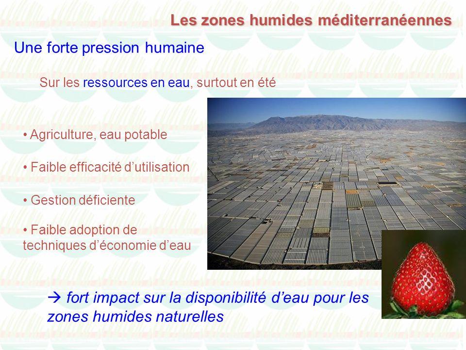 Les zones humides méditerranéennes Une forte pression humaine Agriculture, eau potable fort impact sur la disponibilité deau pour les zones humides na