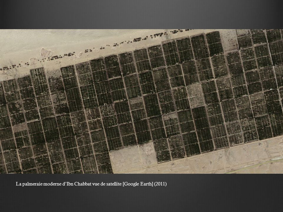 La palmeraie moderne dIbn Chabbat vue de satellite [Google Earth] (2011)