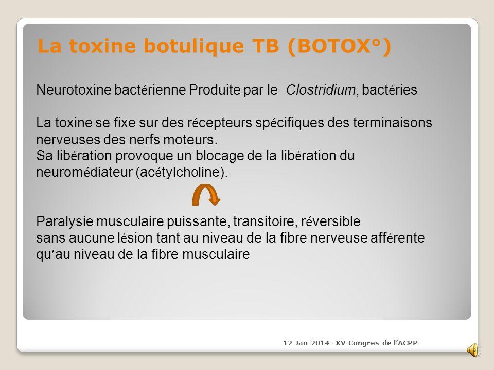 La toxine botulique TB (BOTOX°) Neurotoxine bact é rienne Produite par le Clostridium, bact é ries La toxine se fixe sur des r é cepteurs sp é cifiques des terminaisons nerveuses des nerfs moteurs.