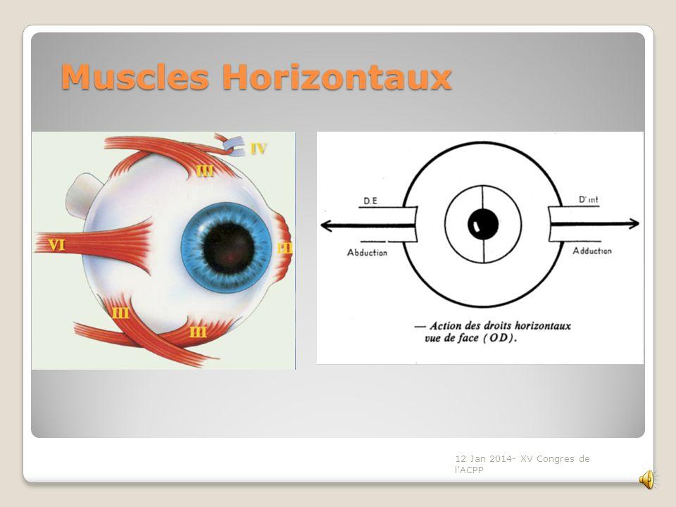 Mécanisme daction Mécanisme daction Les modifications périphériques vont retentir sur les aires oculomotrices centrales Plaques motrices des droits in