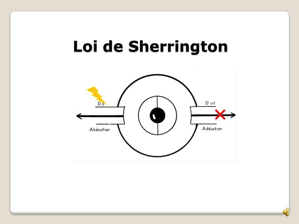 Loi de Sherrington