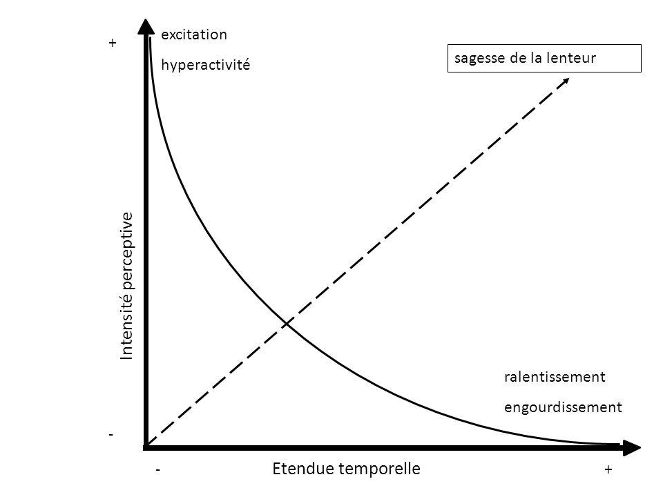 + - -+ excitation hyperactivité ralentissement engourdissement sagesse de la lenteur Intensité perceptive Etendue temporelle