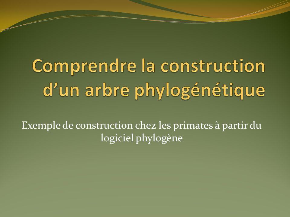 Exemple de construction chez les primates à partir du logiciel phylogène