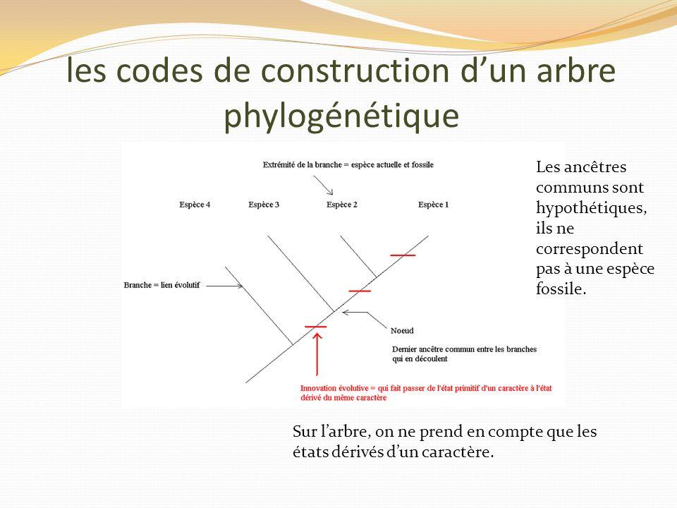 les codes de construction dun arbre phylogénétique Sur larbre, on ne prend en compte que les états dérivés dun caractère. Les ancêtres communs sont hy