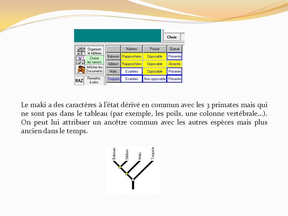 Le maki a des caractères à létat dérivé en commun avec les 3 primates mais qui ne sont pas dans le tableau (par exemple, les poils, une colonne vertéb