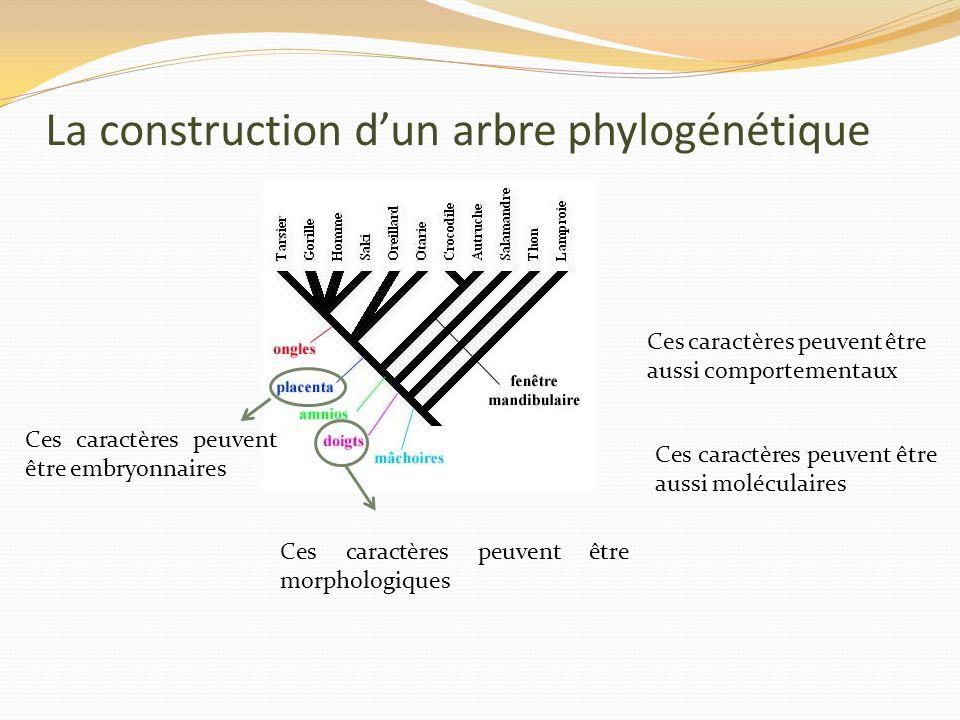 La construction dun arbre phylogénétique Ces caractères peuvent être morphologiques Ces caractères peuvent être embryonnaires Ces caractères peuvent être aussi comportementaux Ces caractères peuvent être aussi moléculaires