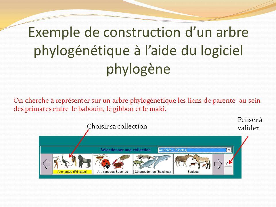 Exemple de construction dun arbre phylogénétique à laide du logiciel phylogène On cherche à représenter sur un arbre phylogénétique les liens de parenté au sein des primates entre le babouin, le gibbon et le maki.