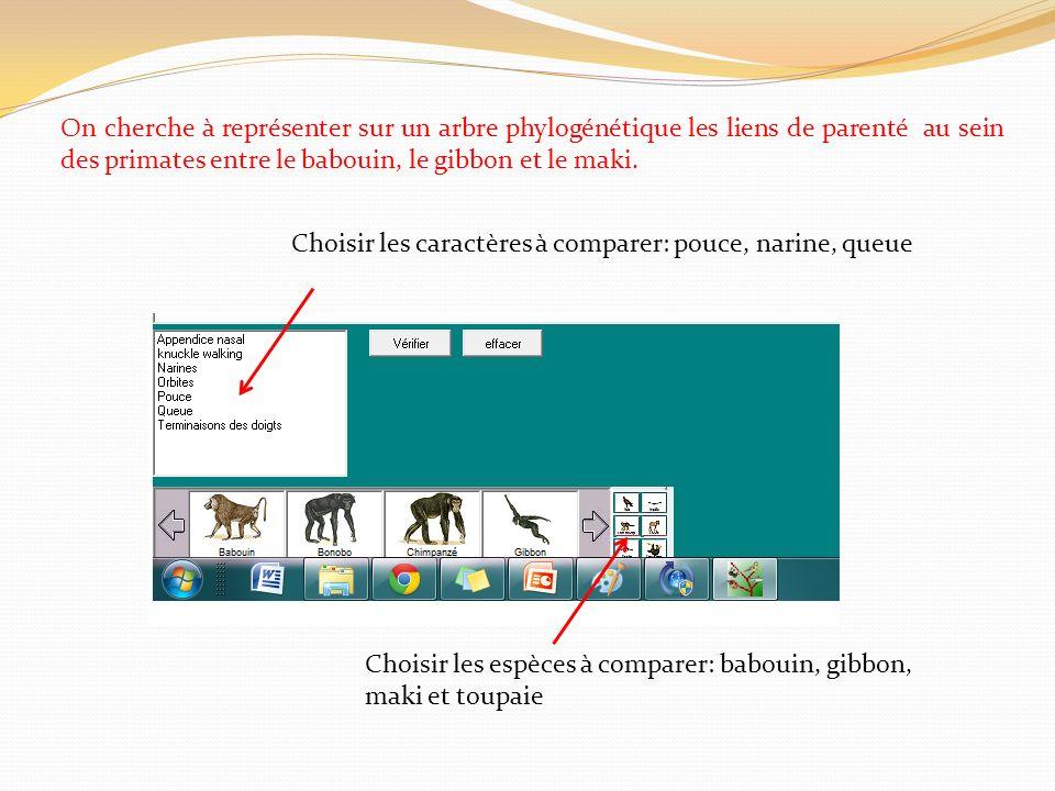 On cherche à représenter sur un arbre phylogénétique les liens de parenté au sein des primates entre le babouin, le gibbon et le maki. Choisir les car