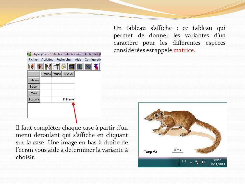 Un tableau saffiche : ce tableau qui permet de donner les variantes dun caractère pour les différentes espèces considérées est appelé matrice. Il faut