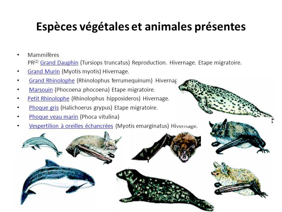 Espèces végétales et animales présentes Mammifères PR (2) Grand Dauphin (Tursiops truncatus) Reproduction. Hivernage. Etape migratoire.Grand Dauphin G