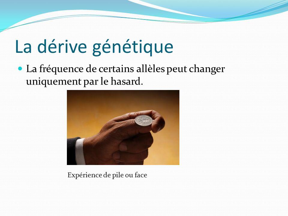 La dérive génétique La fréquence de certains allèles peut changer uniquement par le hasard.