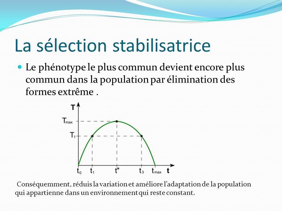 La sélection stabilisatrice Le phénotype le plus commun devient encore plus commun dans la population par élimination des formes extrême.
