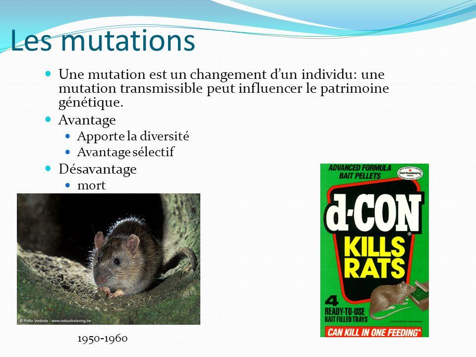 Les mutations Une mutation est un changement dun individu: une mutation transmissible peut influencer le patrimoine génétique.