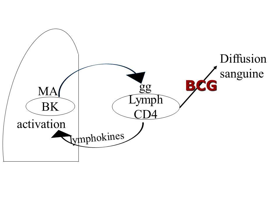 Comment BK arrive dans d'autres organes que le poumon? Au cours de la PIT: dissémination dans tout lorganisme Foyers secondaires: séreuses, os, foie,