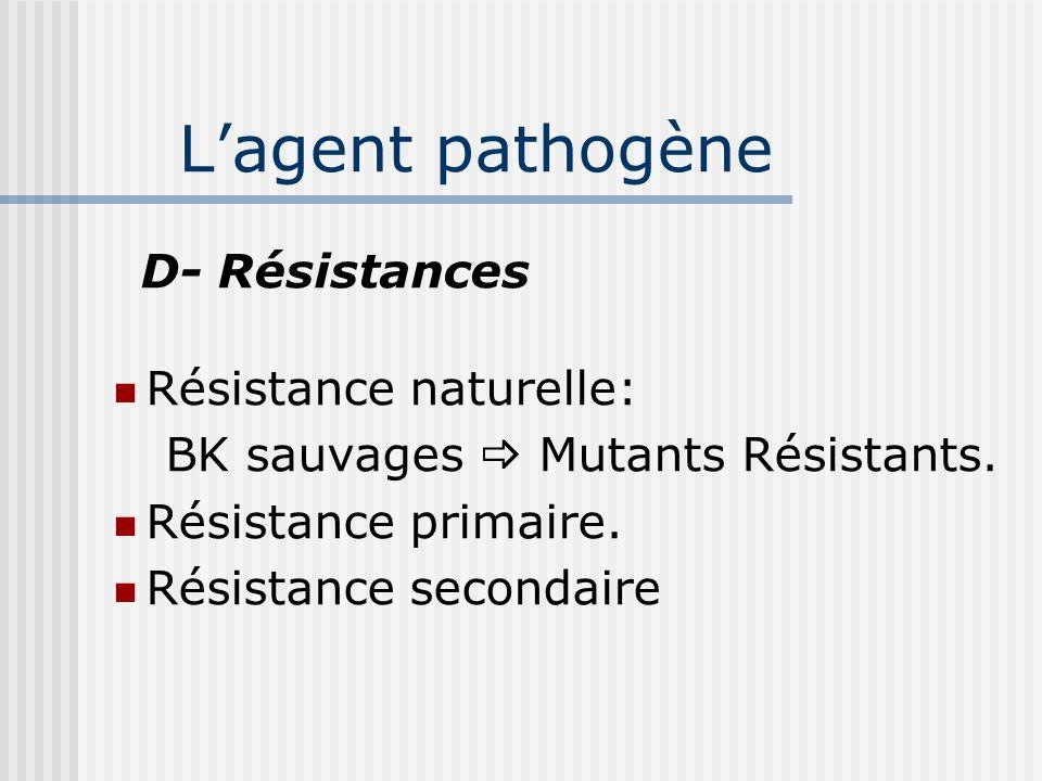 Lagent pathogène C- Populations bacillaires A.Extra-cellulaires B.Intra-cellulaires C.Intra-extracellulaires D.BK dormants MB. accéléré MB. ralenti Co
