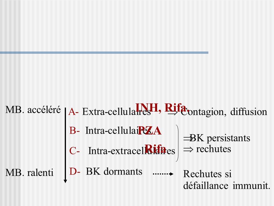 I-BASES BIOLOGIQUES DU TRAITEMENT Multiplication lente. Présence de mutants résistants. Populations bacillaires différentes.