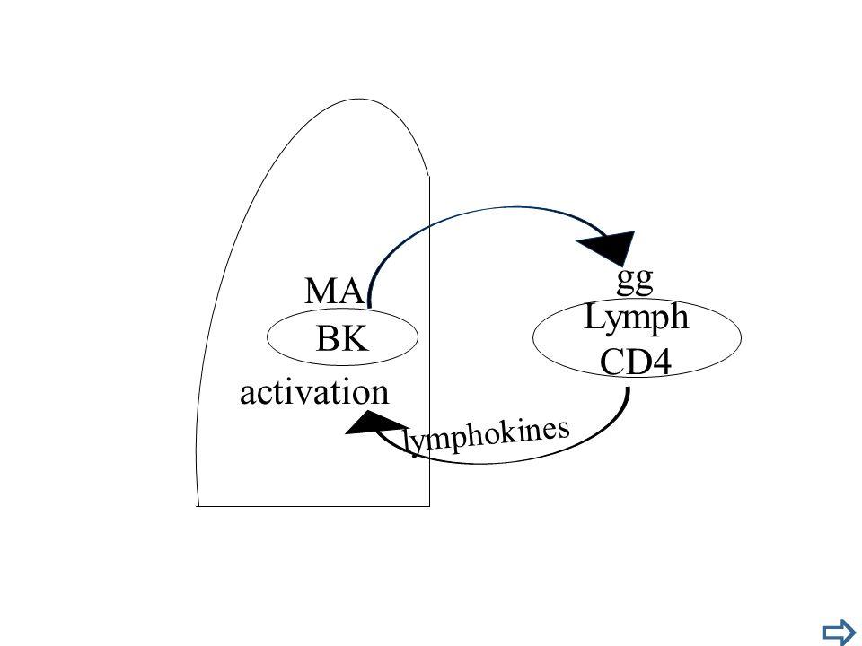 BK MA activation Lymph CD4 lymphokines gg