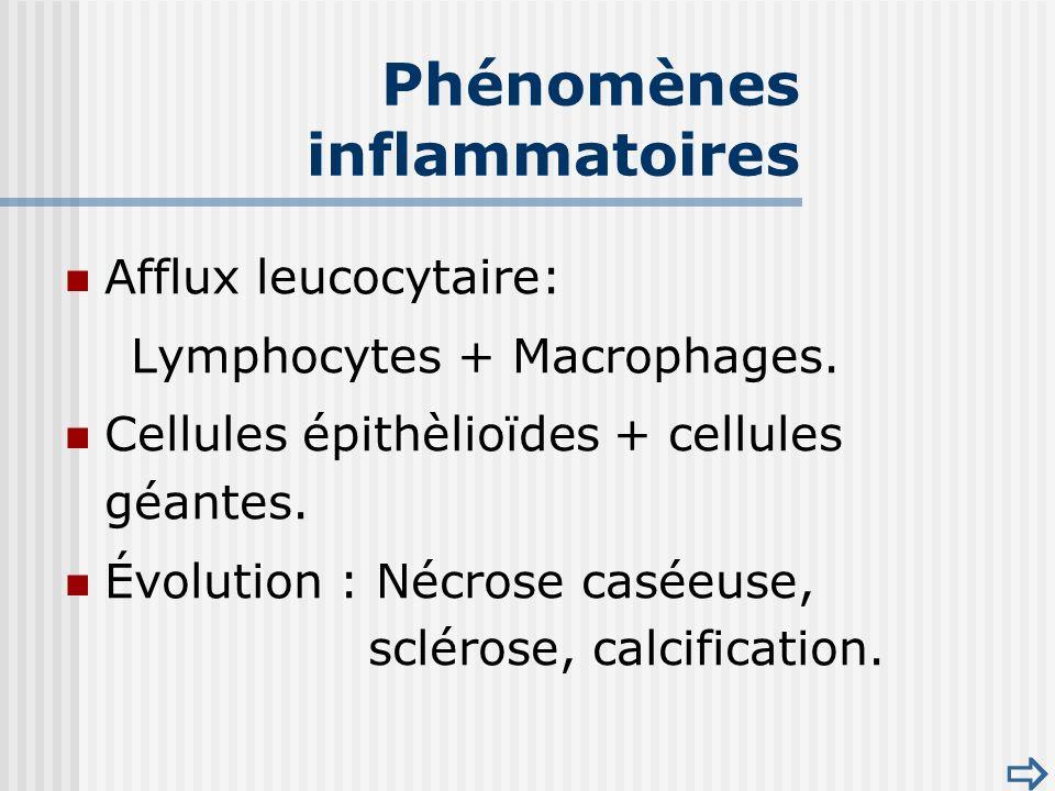 Afflux leucocytaire: Lymphocytes + Macrophages.Cellules épithèlioïdes + cellules géantes.