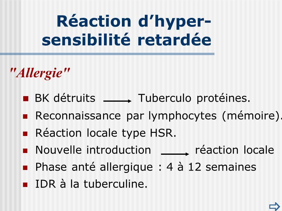 Allergie BK détruits Tuberculo protéines.Reconnaissance par lymphocytes (mémoire).
