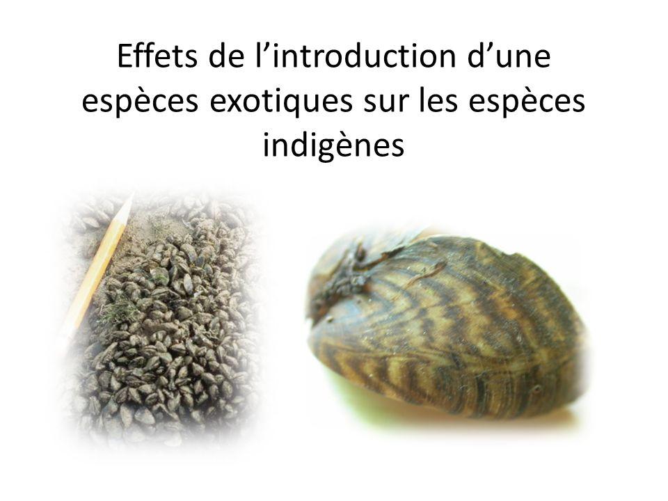 Effets de lintroduction dune espèces exotiques sur les espèces indigènes