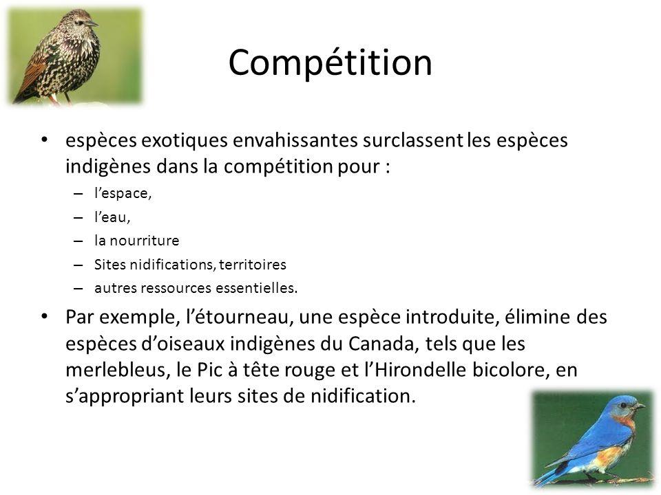 Compétition espèces exotiques envahissantes surclassent les espèces indigènes dans la compétition pour : – lespace, – leau, – la nourriture – Sites nidifications, territoires – autres ressources essentielles.