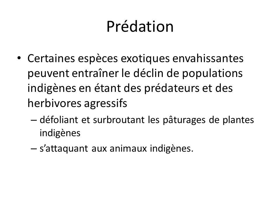 Prédation Certaines espèces exotiques envahissantes peuvent entraîner le déclin de populations indigènes en étant des prédateurs et des herbivores agressifs – défoliant et surbroutant les pâturages de plantes indigènes – sattaquant aux animaux indigènes.