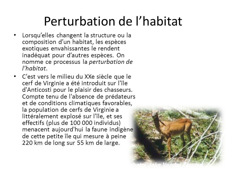 Perturbation de lhabitat Lorsquelles changent la structure ou la composition dun habitat, les espèces exotiques envahissantes le rendent inadéquat pour dautres espèces.