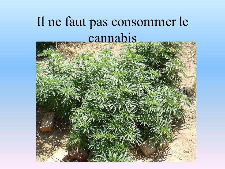 Il ne faut pas consommer le cannabis