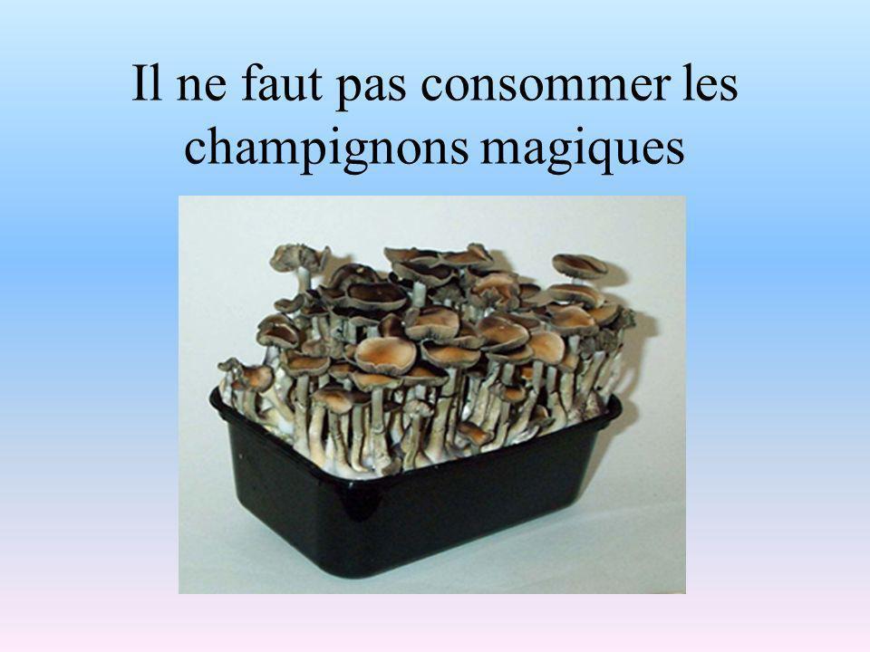 Il ne faut pas consommer les champignons magiques