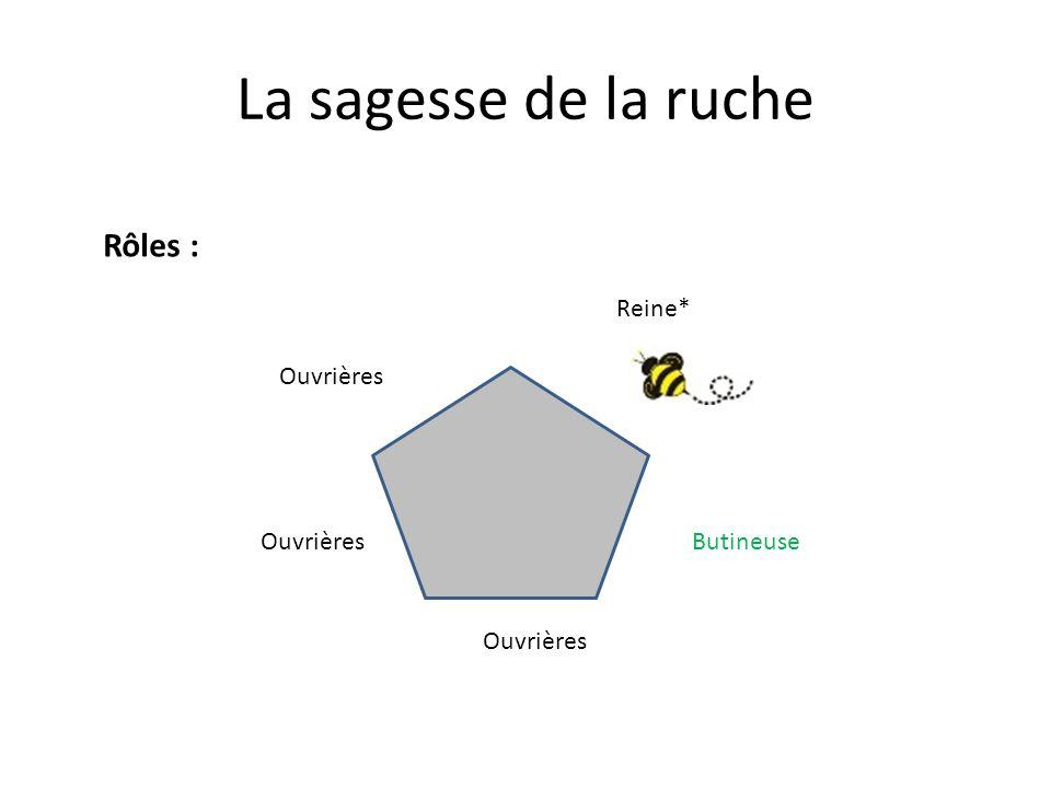 La sagesse de la ruche Reine* Ouvrières Butineuse Rôles :