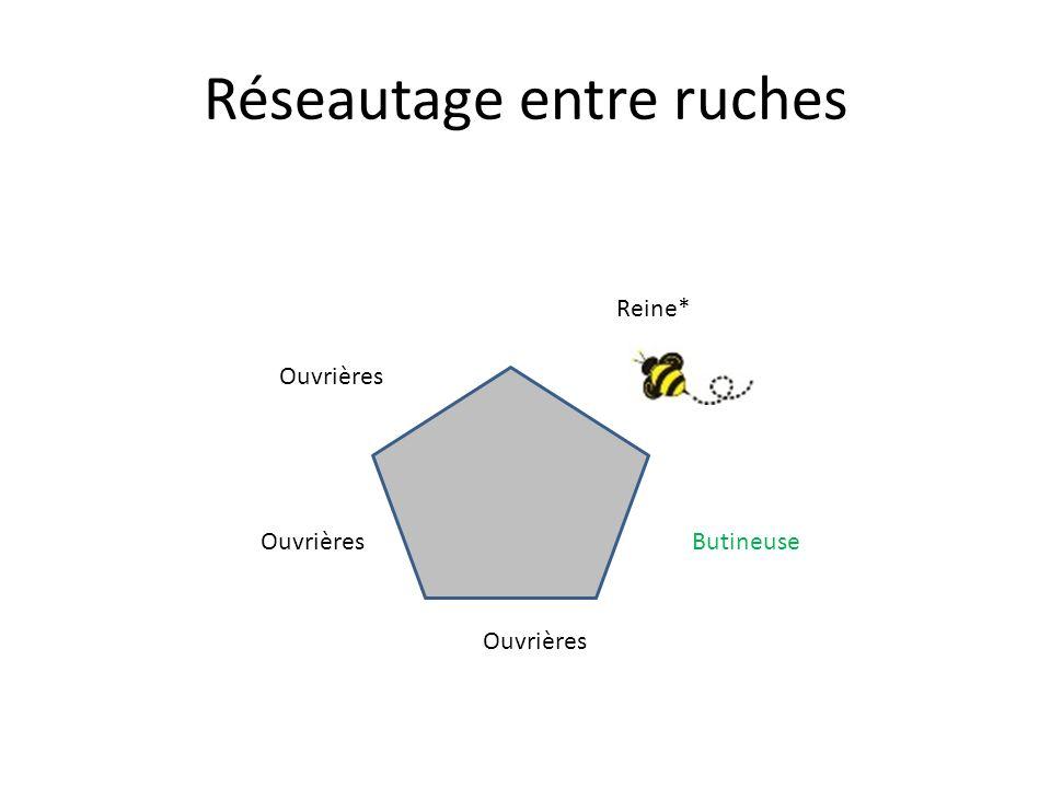 Réseautage entre ruches Reine* Ouvrières Butineuse