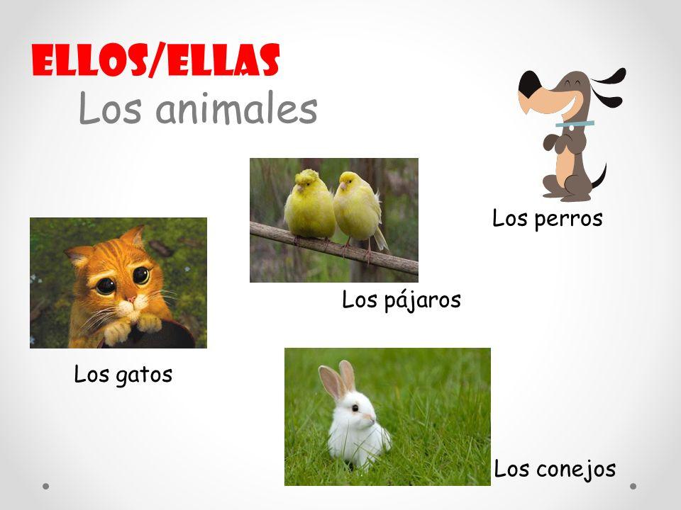 Los animales Los perros Los gatos Los conejos Los pájaros Ellos/ellas