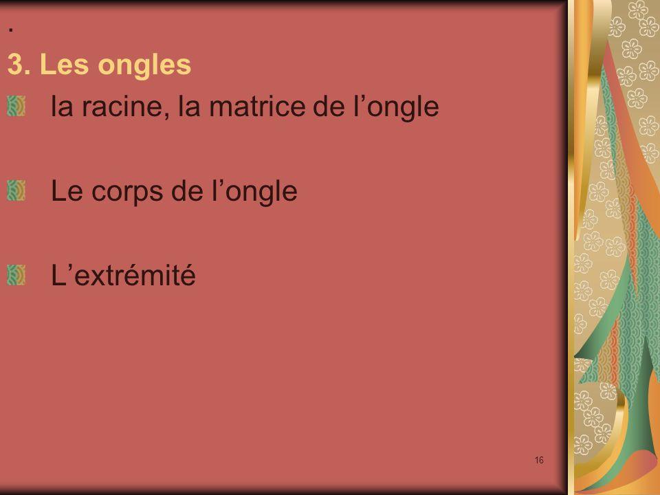 16. 3. Les ongles la racine, la matrice de longle Le corps de longle Lextrémité