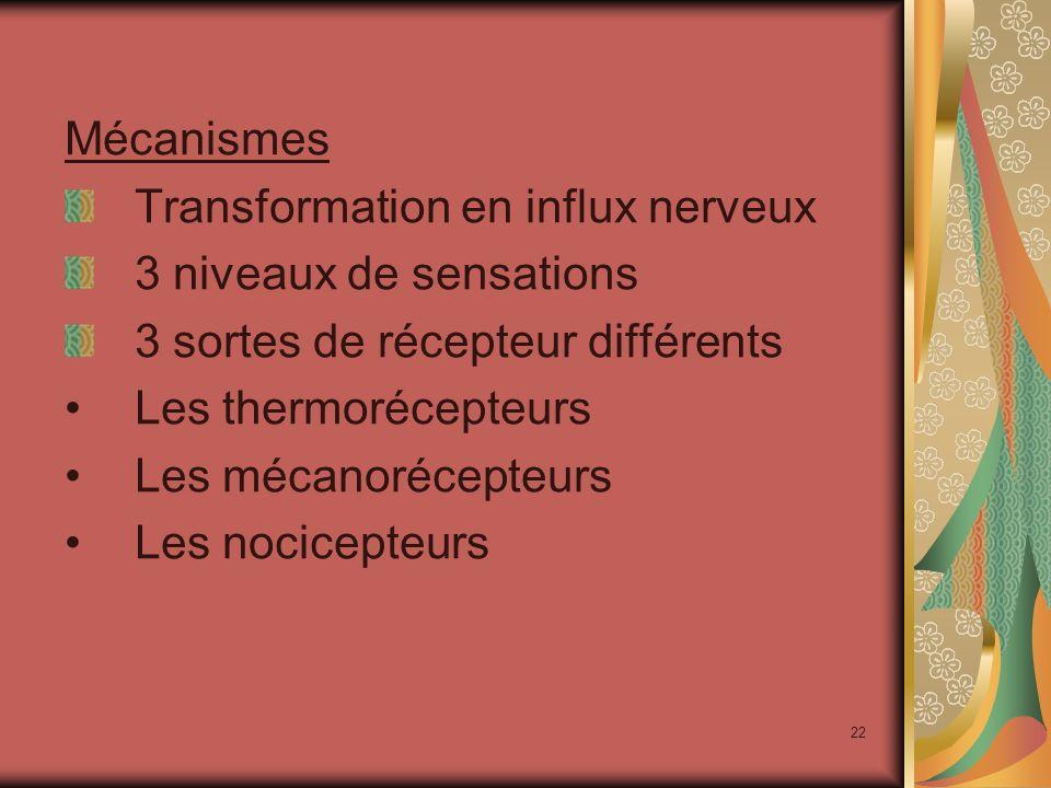 22 Mécanismes Transformation en influx nerveux 3 niveaux de sensations 3 sortes de récepteur différents Les thermorécepteurs Les mécanorécepteurs Les nocicepteurs