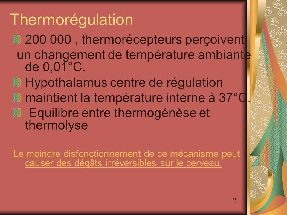23 Thermorégulation 200 000, thermorécepteurs perçoivent un changement de température ambiante de 0,01°C.