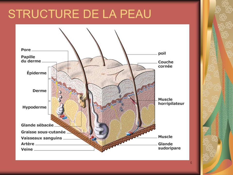 6 STRUCTURE DE LA PEAU