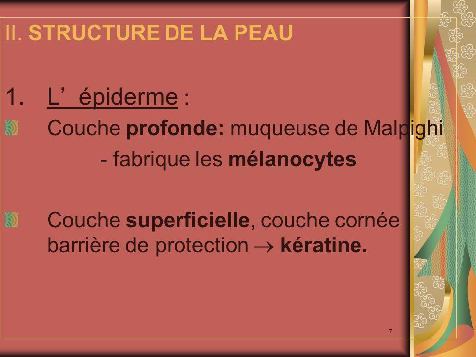 8 2.Le derme: - réseau dense: fibres collagènes et musculaires lisses.