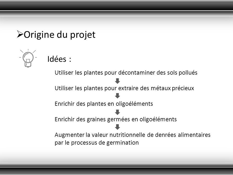 Origine du projet Idées : Utiliser les plantes pour décontaminer des sols pollués Utiliser les plantes pour extraire des métaux précieux Enrichir des