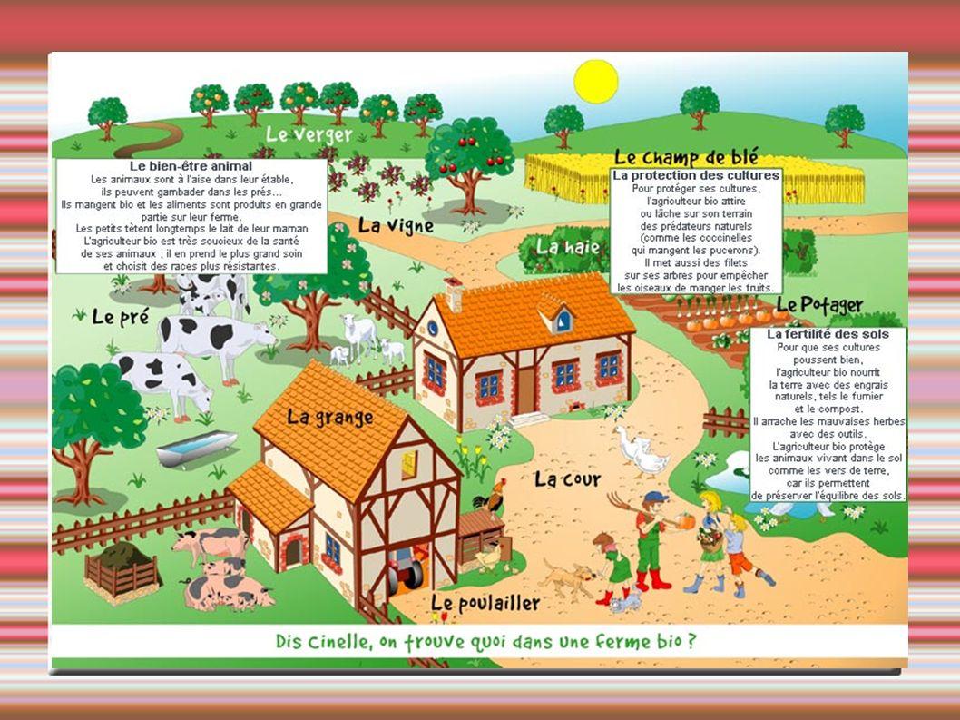 L Agriculteur Biologique agit pour respecter l environnement grâce à des méthodes de culture écologiques et en utilisant les ressources naturelles de son exploitation Léleveur utilise le fumier des animaux (compost) pour fertiliser les sols et avoir une récolte abondante, Les insectes (coccinelles), oiseaux (piverts, mésanges) vivent dans les haies et se nourrissent des pucerons et prédateurs des cultures,
