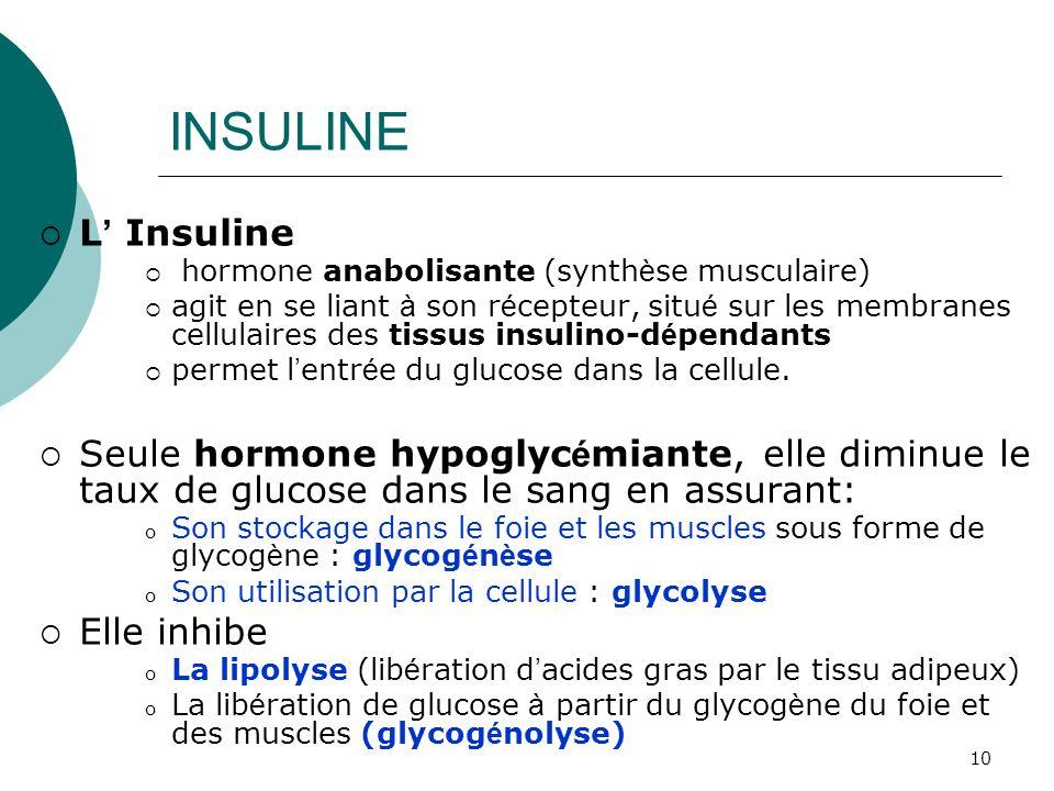 10 INSULINE L Insuline hormone anabolisante (synth è se musculaire) agit en se liant à son r é cepteur, situ é sur les membranes cellulaires des tissu