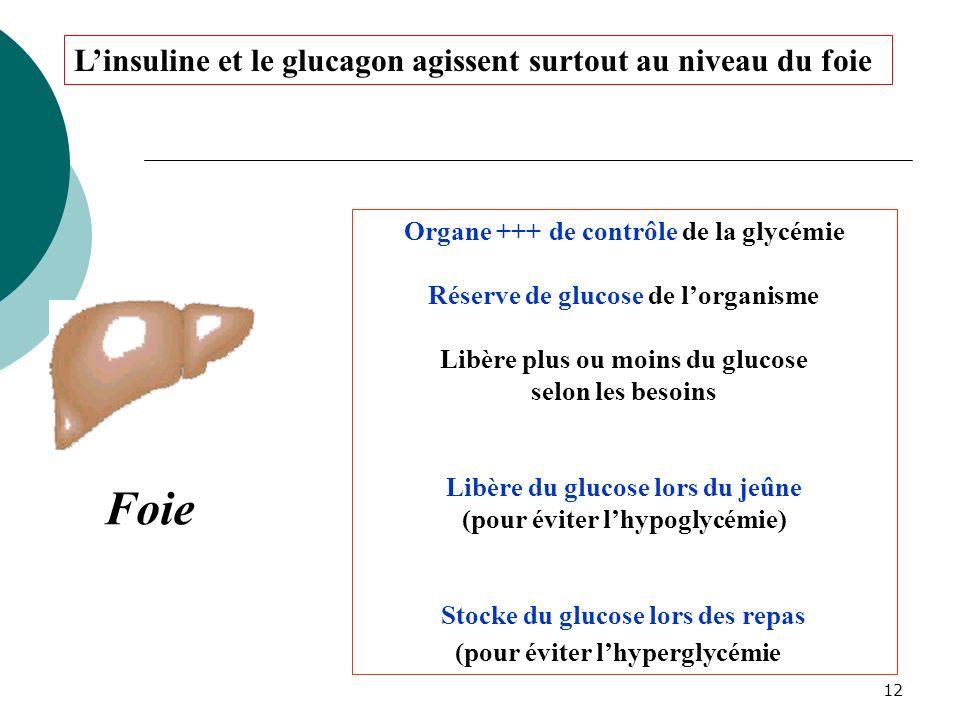 12 Foie Organe +++ de contrôle de la glycémie Réserve de glucose de lorganisme Libère plus ou moins du glucose selon les besoins Libère du glucose lor