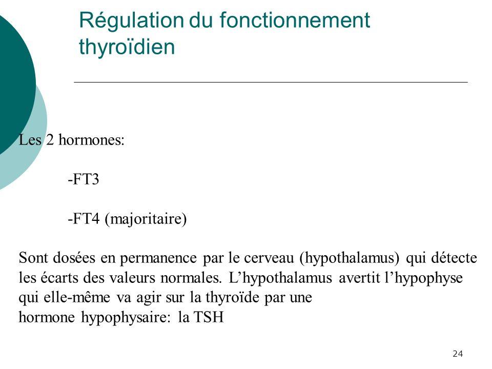 24 Régulation du fonctionnement thyroïdien Les 2 hormones: -FT3 -FT4 (majoritaire) Sont dosées en permanence par le cerveau (hypothalamus) qui détecte