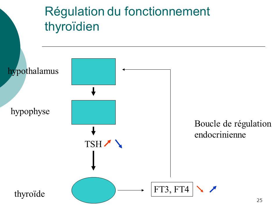 25 Régulation du fonctionnement thyroïdien hypothalamus hypophyse TSH thyroïde FT3, FT4 Boucle de régulation endocrinienne