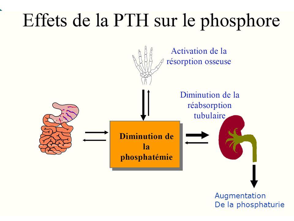 41 Augmentation De la phosphaturie