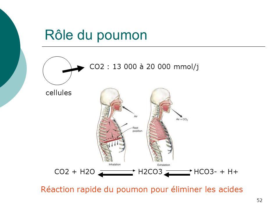 52 Rôle du poumon cellules CO2 : 13 000 à 20 000 mmol/j CO2 + H2O H2CO3HCO3- + H+ Réaction rapide du poumon pour éliminer les acides
