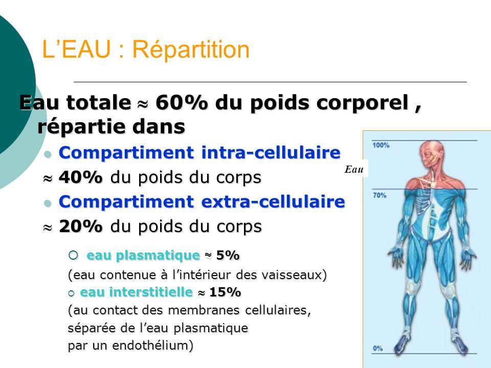 56 LEAU : Répartition Eau totale 60% du poids corporel, répartie dans Compartiment intra-cellulaire Compartiment intra-cellulaire 40% du poids du corp