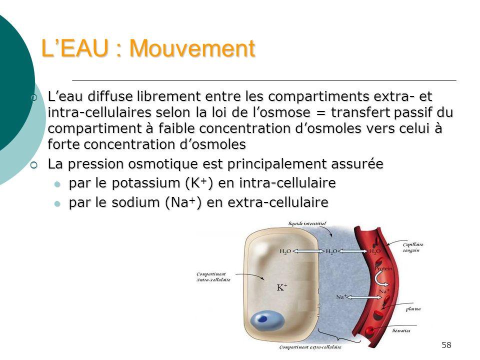 58 LEAU : Mouvement Leau diffuse librement entre les compartiments extra- et intra-cellulaires selon la loi de losmose = transfert passif du compartim