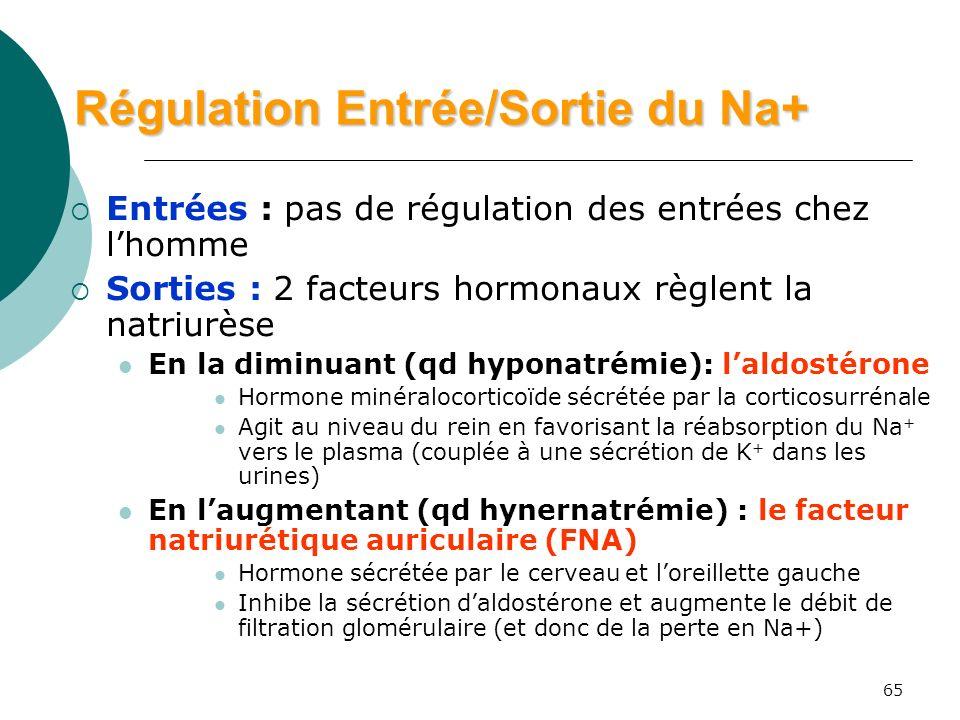 65 Régulation Entrée/Sortie du Na+ Entrées : pas de régulation des entrées chez lhomme Sorties : 2 facteurs hormonaux règlent la natriurèse En la dimi