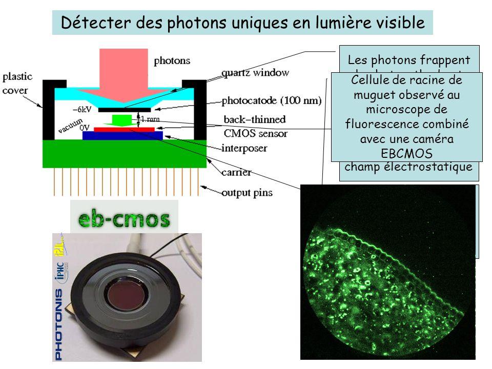 Les éléctrons accélérés sont détectés individuellement par le capteur CMOS Détecter des photons uniques en lumière visible Les électrons sont accéléré