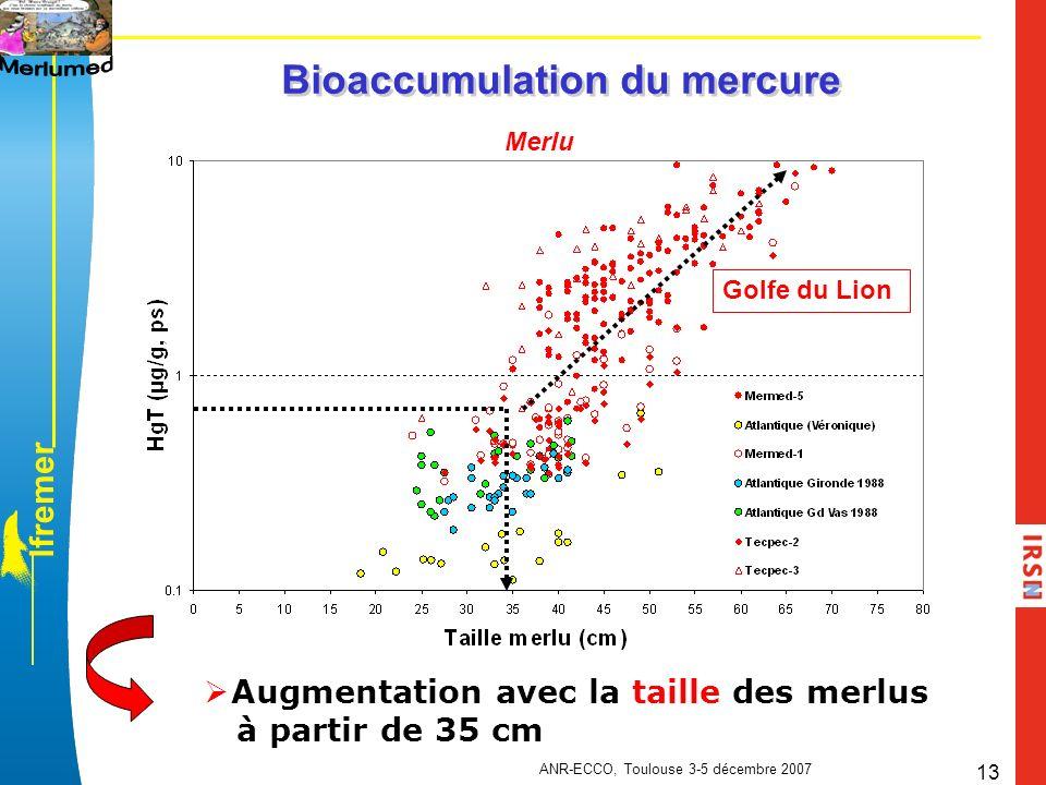 l f r e m e r ANR-ECCO, Toulouse 3-5 décembre 2007 13 Bioaccumulation du mercure Merlu Augmentation avec la taille des merlus à partir de 35 cm Golfe